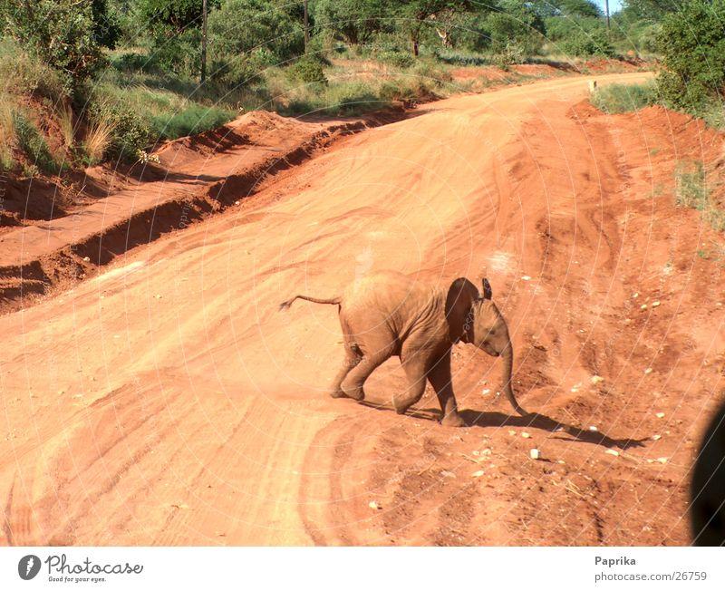 Elefantenbaby Kenia Überqueren Safari rote Erde Straße Tierjunges
