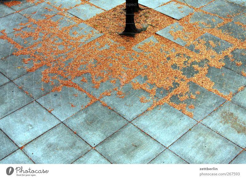 Herbst Natur Stadt Pflanze schön Baum Blatt Umwelt Wand Architektur Mauer Garten Park Wetter Platz Klima
