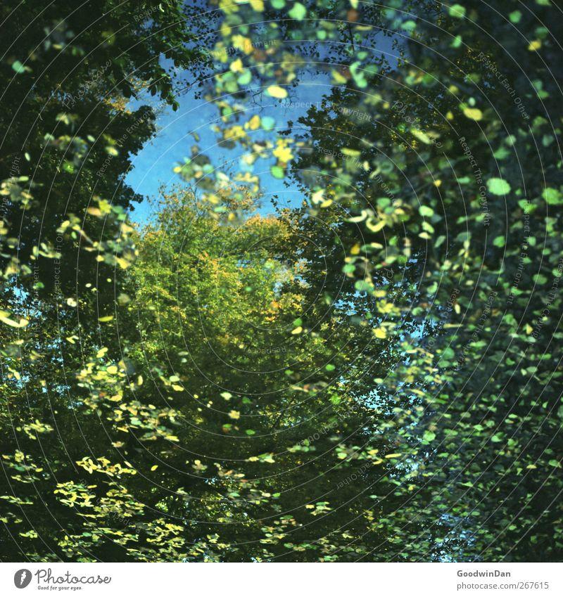 Mirror of my youth. Umwelt Natur Herbst Baum Blatt Park Teich frei groß schön viele Stimmung Farbfoto Detailaufnahme Menschenleer Tag Licht