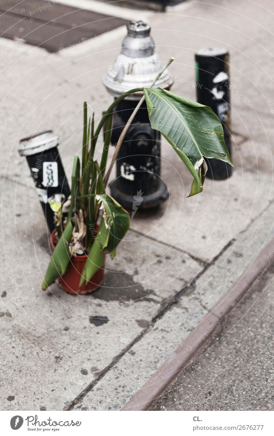 pflanze und hydrant Pflanze Grünpflanze New York City USA Stadt Menschenleer Verkehr Verkehrswege Straße Wege & Pfade Hydrant Asphalt Müll authentisch dreckig