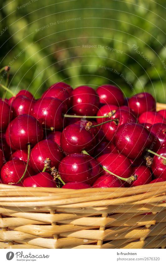 Frische Kirschen Lebensmittel Frucht Bioprodukte Vegetarische Ernährung Trinkwasser Gesunde Ernährung Gartenarbeit Landwirtschaft Forstwirtschaft Sommer wählen
