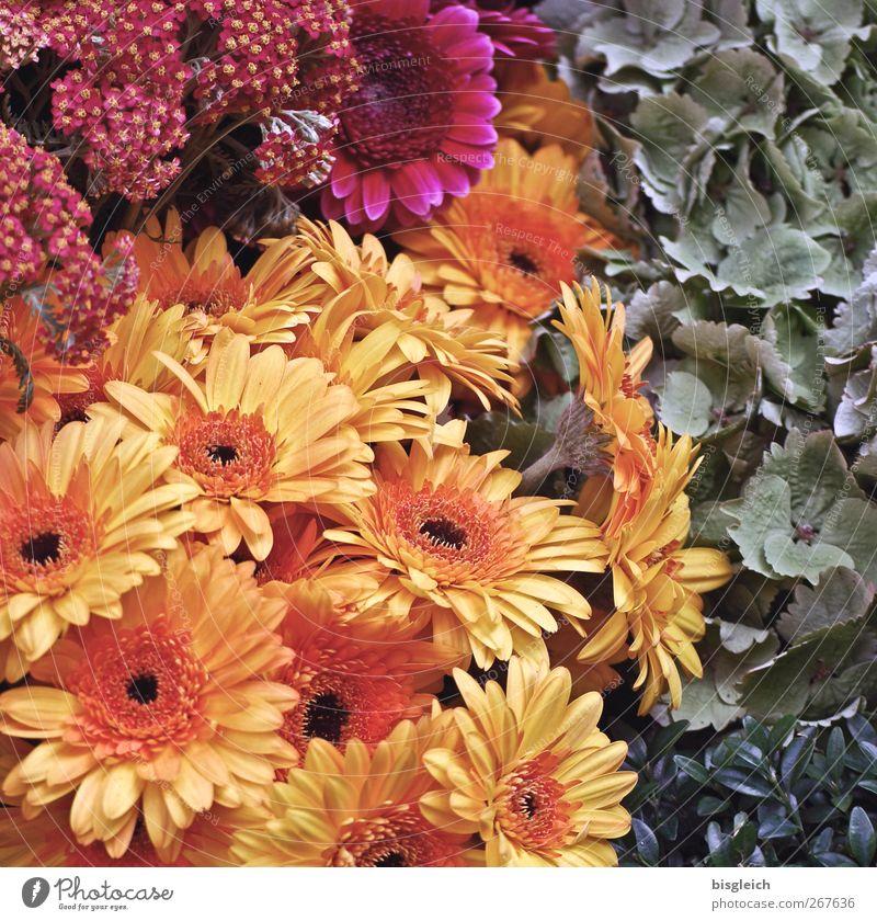 Blumen Pflanze Frühling Sommer Blatt Blüte Blühend Duft mehrfarbig gelb grün rot Blumenladen Farbfoto Außenaufnahme Menschenleer Tag