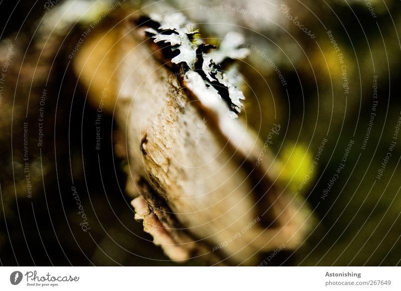 Ast Umwelt Natur Pflanze Baum Sträucher Moos braun grün schwarz weiß Bruch Baumrinde Flechten Holz Zweig Unschärfe Brennpunkt Farbfoto Außenaufnahme Nahaufnahme