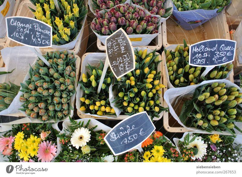 Warten auf Vasenbesitzer mit Kleingeld kaufen Freude Handwerker Gartenarbeit Arbeitsplatz Markt Wirtschaft Einzelhandel Natur Pflanze Frühling Schönes Wetter
