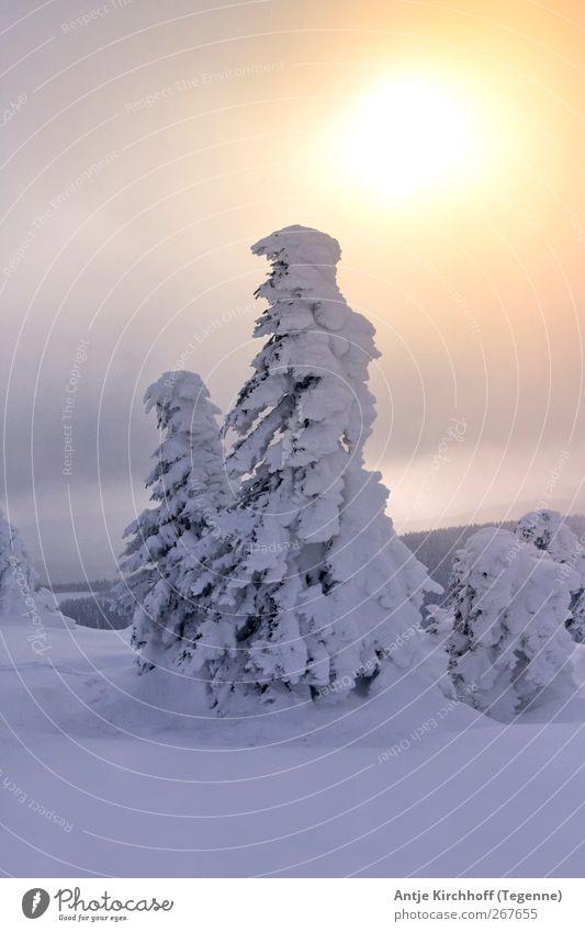 Winterwonderland... Natur weiß Baum Sonne Umwelt Landschaft gelb Schnee Berge u. Gebirge Holz Schneefall Eis Kraft gold leuchten