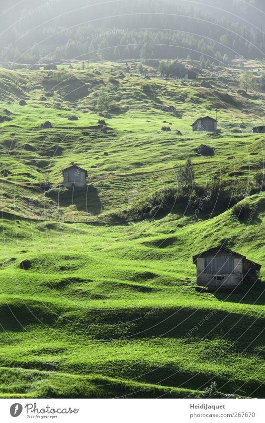 Schweizer Frühnebel Umwelt Natur Landschaft Sommer Nebel Wiese Berge u. Gebirge Dorf Hütte genießen grün Gelassenheit Rasen Morgennebel Farbfoto