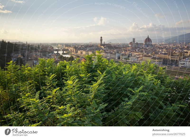 Blick auf Florenz Umwelt Natur Landschaft Himmel Horizont Sonnenaufgang Sonnenuntergang Pflanze Baum Blatt Fluss Arno Italien Stadt Stadtzentrum Altstadt Haus