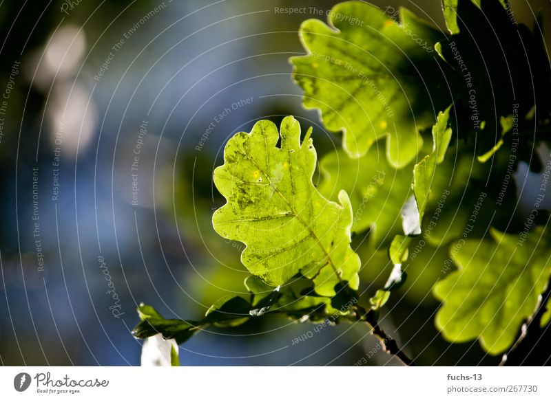 Summer in Hamburg! Natur Ferien & Urlaub & Reisen Pflanze grün Sommer Sonne Erholung Blatt ruhig Umwelt natürlich Garten Park träumen Wachstum ästhetisch