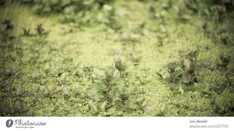 so grün... Natur grün schön Ferien & Urlaub & Reisen Pflanze Blatt Tier Einsamkeit Erholung Umwelt Landschaft Frühling Stimmung Klima Abenteuer authentisch