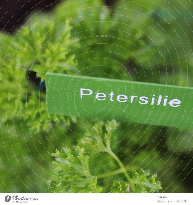 Kräuterlehre Lebensmittel Kräuter & Gewürze Ernährung grün Petersilie Schilder & Markierungen Kräutergarten lecker geschmackvoll Geschmackssinn geschmacklich