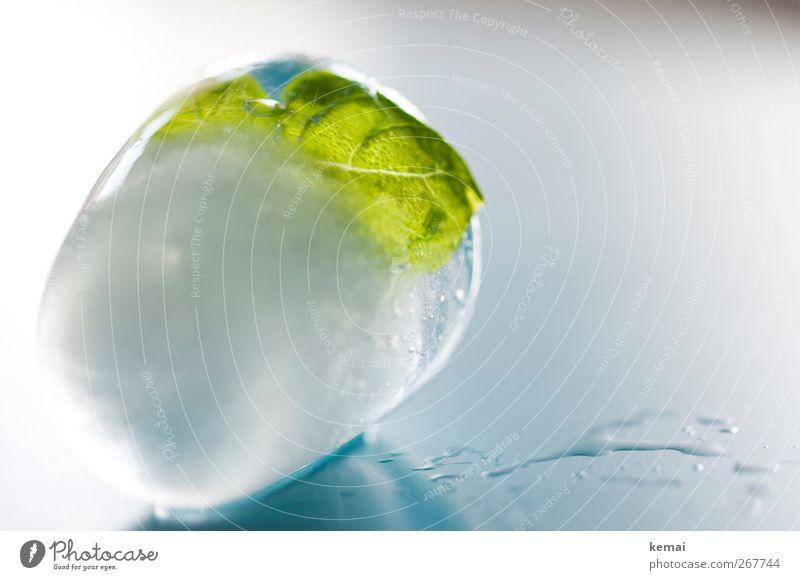 Gefangen Lebensmittel Kräuter & Gewürze Eis Eiswürfel Basilikum Basilikumblatt Ernährung Bioprodukte Vegetarische Ernährung Slowfood Häusliches Leben Tisch