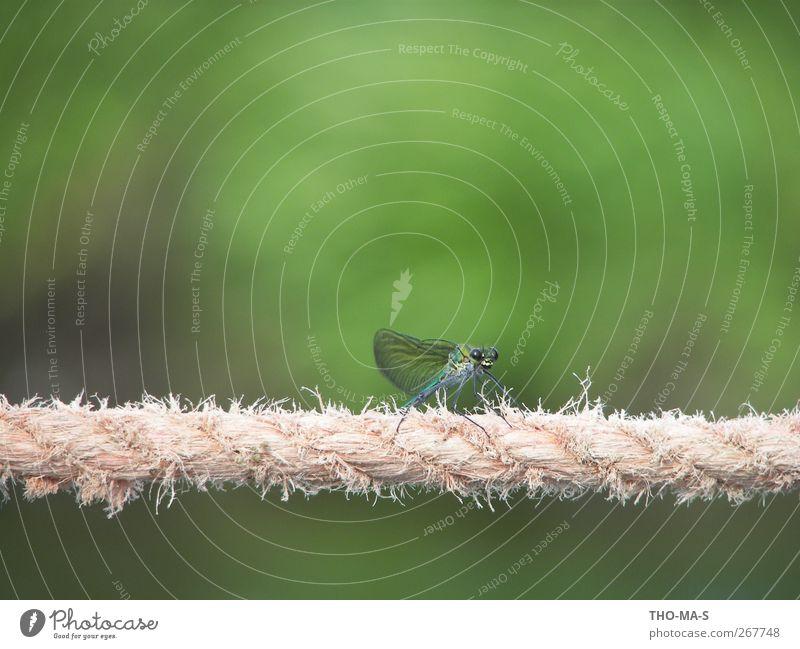 Seiltänzerin Tanzen Tanzveranstaltung Tänzer Balletttänzer Umwelt Natur Tier Luft Flussufer Moor Sumpf Libellenflügel 1 Linie elegant blau grün Frühlingsgefühle