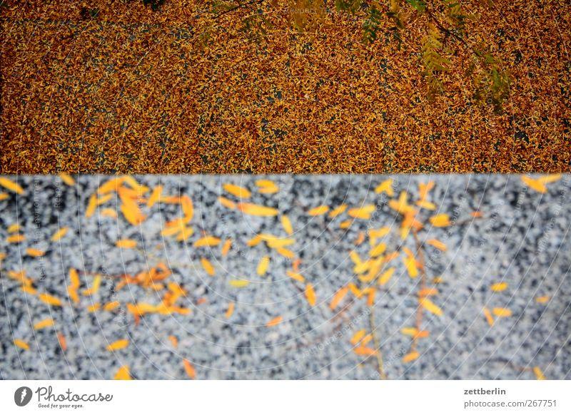 Herbst again Natur schön Baum Pflanze rot Blatt Umwelt Landschaft gelb Farbstoff Stein Garten Mauer Park orange