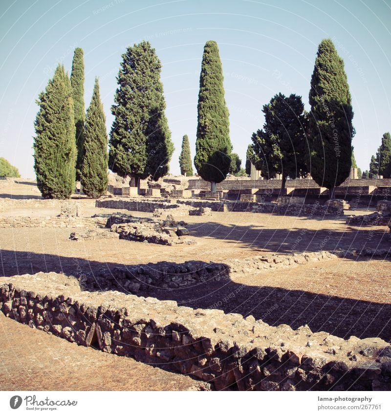 Itálica [XLII] Landschaft Baum Zypresse Felsen Italica Santiponce Sevilla Andalusien Spanien Stadt Ruine Architektur Mauer Wand Sehenswürdigkeit alt Verfall