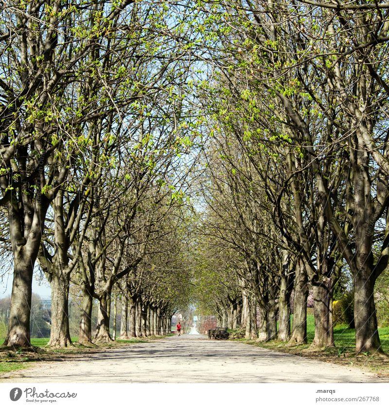 Allee Natur Landschaft Urelemente Frühling Klima Klimawandel Schönes Wetter Baum Park frisch schön Perspektive Symmetrie Wege & Pfade Tunnelblick Fußweg