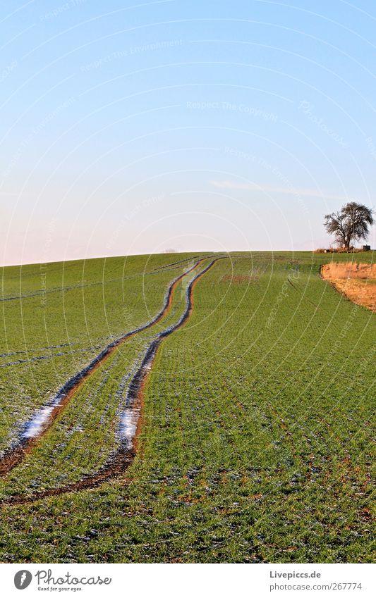 Röbel an der Müritz Himmel Natur blau grün Baum Pflanze Umwelt Landschaft Frühling Gras Wetter Feld Schönes Wetter Wolkenloser Himmel Grünpflanze Stadtrand