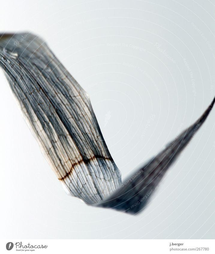 bamboo Natur Pflanze Herbst Blatt Grünpflanze exotisch verblüht dehydrieren alt trocken blau grau schwarz verknickt Wassertropfen verschrumpelt Tod Farbfoto