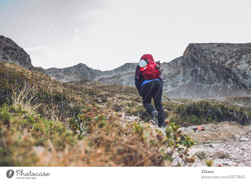 Junge Frau bei Aufstieg zum Gipfe | Alpenüberquerung Freizeit & Hobby Ferien & Urlaub & Reisen Berge u. Gebirge wandern Jugendliche 18-30 Jahre Erwachsene Natur