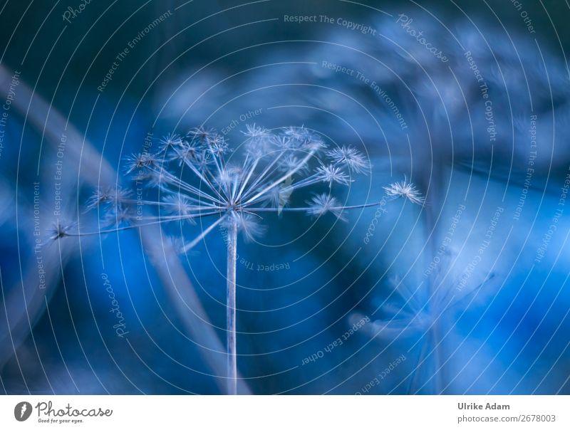 Traum in Blau - Natur Design Wellness harmonisch Spa Schwimmbad Dekoration & Verzierung Tapete Trauerfeier Beerdigung Pflanze Herbst Winter Blume Blüte Garten