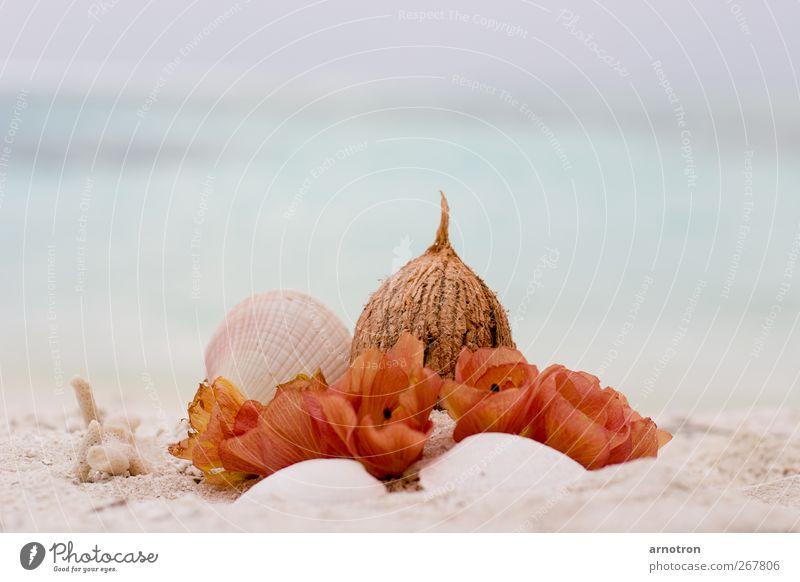 Kokosnuß–Hochzeit blau Ferien & Urlaub & Reisen Sommer rot Meer Strand ruhig Blüte träumen Feste & Feiern Insel Schönes Wetter Wellness genießen Blühend Sommerurlaub