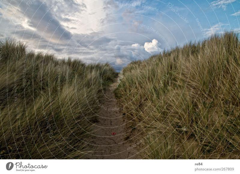 Freundchen, ab jetzt weht ein ganz anderer Wind! Natur Sommer Strand Wolken ruhig Erholung Umwelt Landschaft Bewegung Küste Gras Sand Horizont Klima Schönes Wetter Nordsee