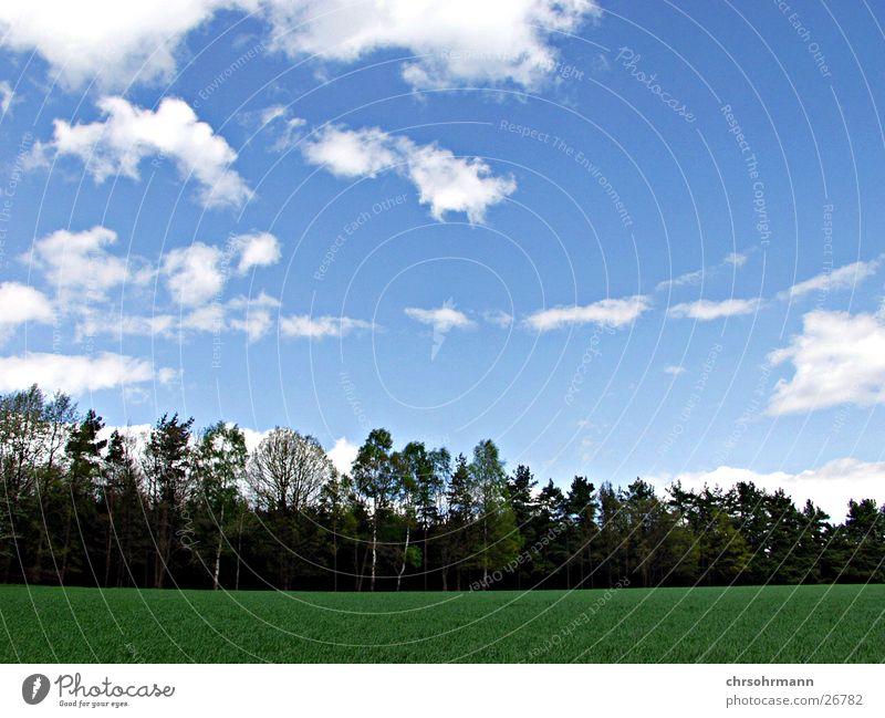 What a day Baum Wolken Blauer Himmel Grüne Wiese Schöner Tag
