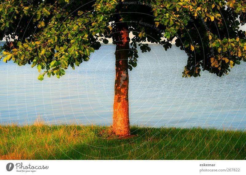 Baum Natur blau Wasser grün schön Ferien & Urlaub & Reisen Pflanze Sonne Sommer Erholung Umwelt Wiese Wärme Gras See
