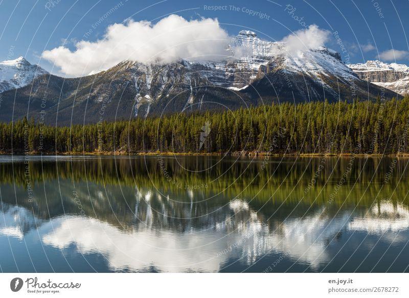 Spiegelglatt Ferien & Urlaub & Reisen Ausflug Berge u. Gebirge Natur Landschaft Wolken Sommer Herbst Wetter Wald Rocky Mountains Schneebedeckte Gipfel Seeufer