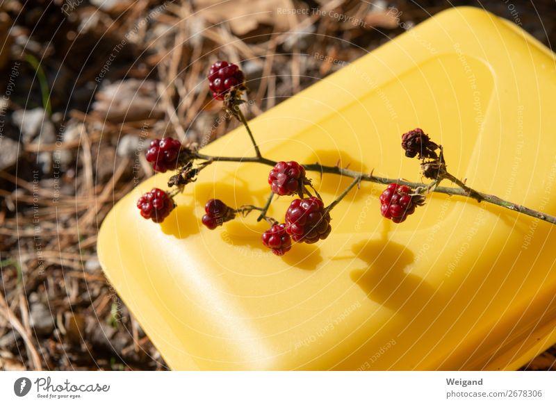 Waldhimbeeren Lebensmittel Frucht Ernährung Bioprodukte Vegetarische Ernährung Slowfood Gesundheit Umwelt frisch gelb rot Himbeeren Beeren lecker Sammlung