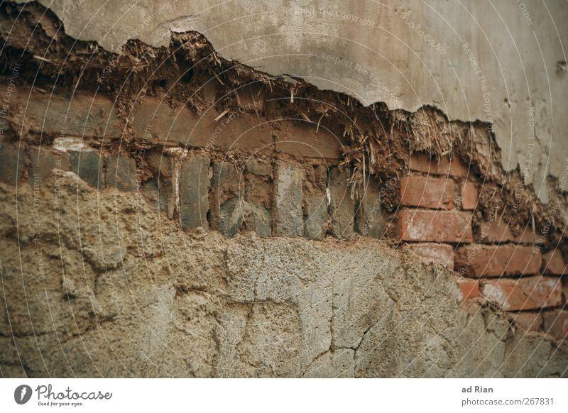 bröckelnd Altstadt Haus Ruine Mauer Wand Backsteinwand Backsteinfassade verfallen alt Farbfoto Außenaufnahme Muster Strukturen & Formen Totale