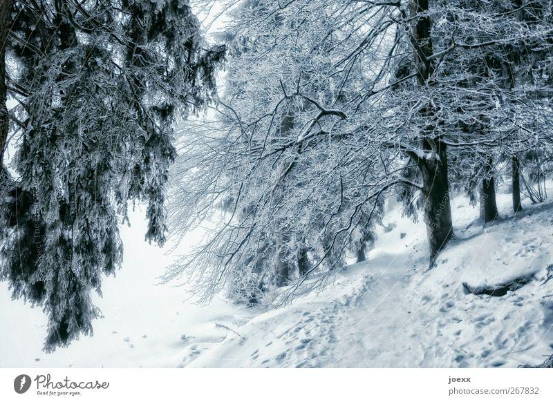 Tschüss! Natur Winter Eis Frost Schnee Wald Wege & Pfade kalt blau grau schwarz weiß ruhig Mummelsee Farbfoto Außenaufnahme Menschenleer Tag