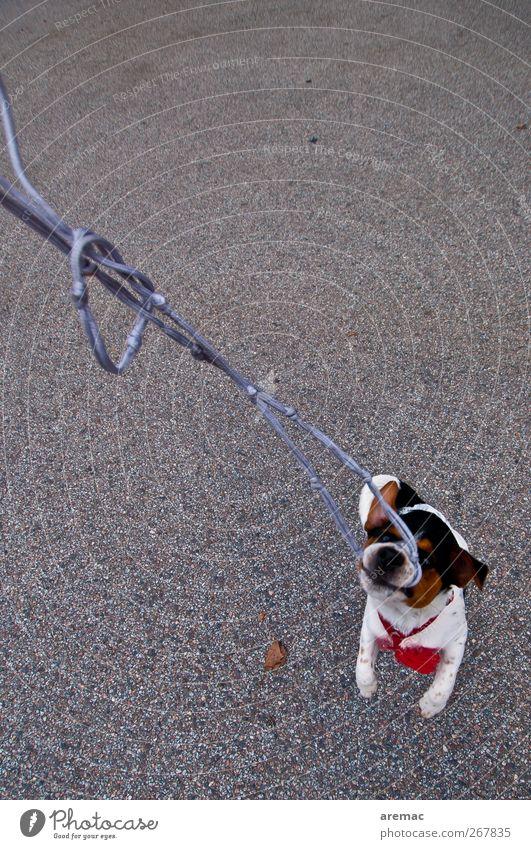 Machtkampf Hund Tier Leben Spielen Haustier kämpfen