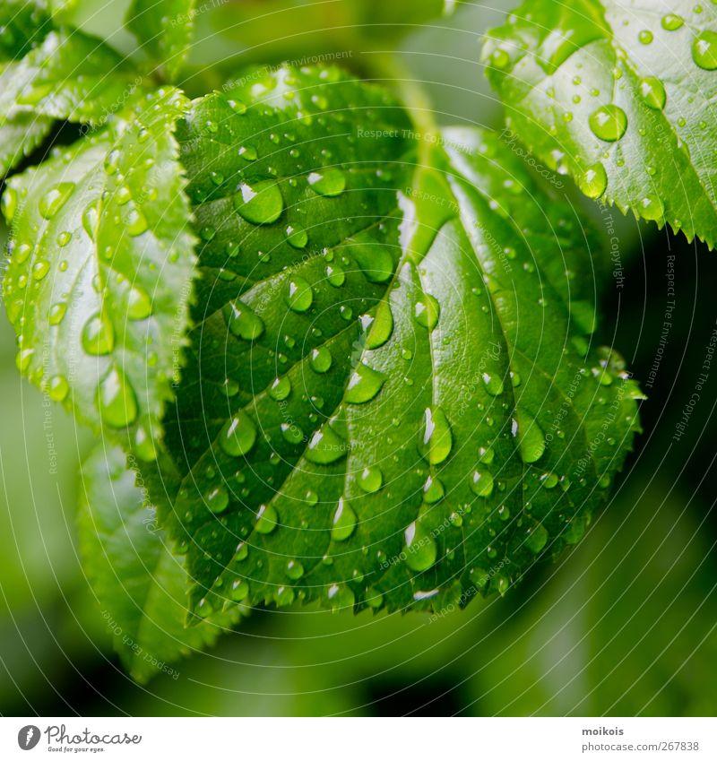 erstes grün Natur Pflanze Wasser Erholung Blatt ruhig Leben Frühling Garten Kunst Energiewirtschaft Regen wandern Kreativität Wassertropfen Wellness