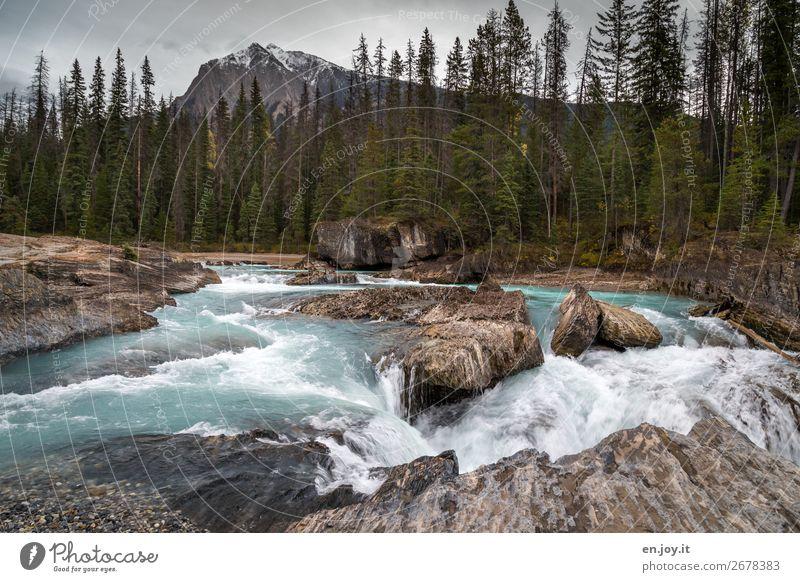 Natural Bridge Ferien & Urlaub & Reisen Ausflug Berge u. Gebirge Landschaft Wald Felsen Flussufer Kicking Horse Wasserfall wild Abenteuer Klima Tourismus Kanada