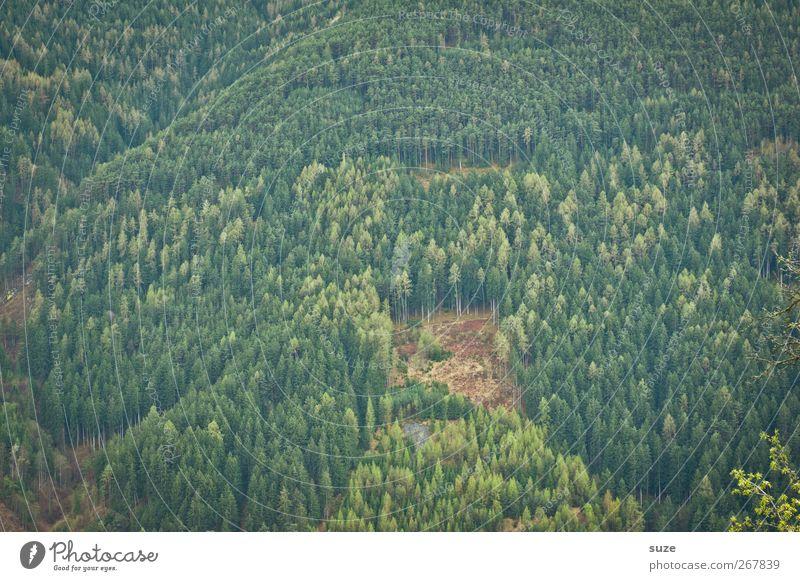 Wald Landwirtschaft Forstwirtschaft Umwelt Natur Landschaft Pflanze Urelemente Frühling Sommer Klima Klimawandel Schönes Wetter Berge u. Gebirge authentisch
