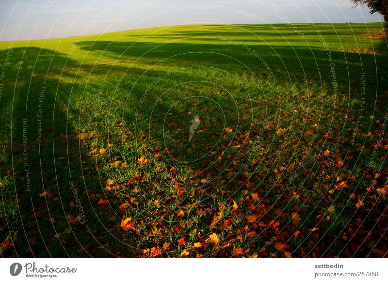 Weit Umwelt Natur Landschaft Pflanze Urelemente Erde Herbst Klima Klimawandel Wetter Schönes Wetter Gras Blatt Grünpflanze Wiese Feld gut schön Ferne Herbstlaub