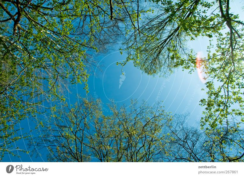Frühlüngshümmel Garten Umwelt Natur Pflanze Himmel Frühling Klima Klimawandel Wetter Schönes Wetter Blume Blüte Grünpflanze Wachstum frisch Unendlichkeit schön