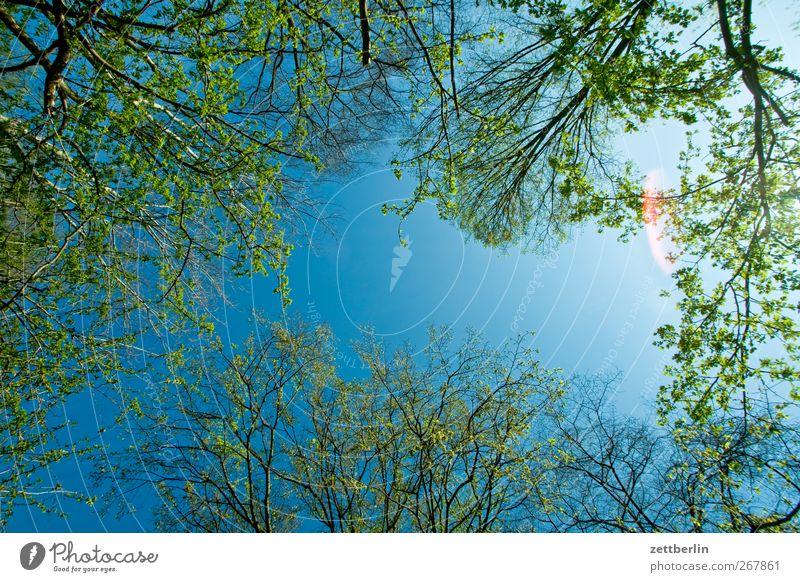 Frühlüngshümmel Himmel Natur schön Pflanze Blume Blatt Umwelt Frühling Garten Blüte Wetter Klima frisch Wachstum Schönes Wetter Unendlichkeit
