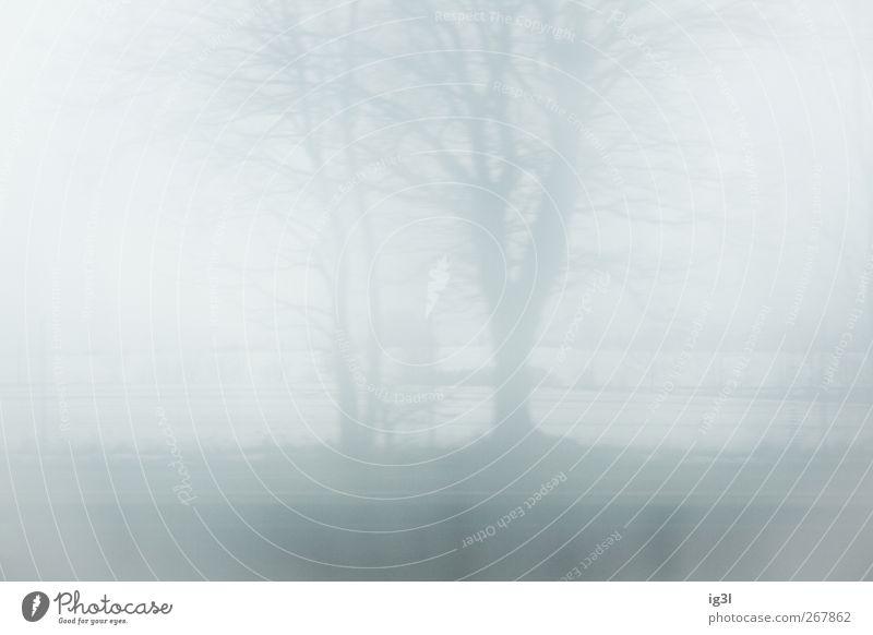 Horizont weiß Baum Winter ruhig Landschaft grau Stimmung hell Hintergrundbild Feld authentisch trist Textfreiraum kahl laublos Morgennebel