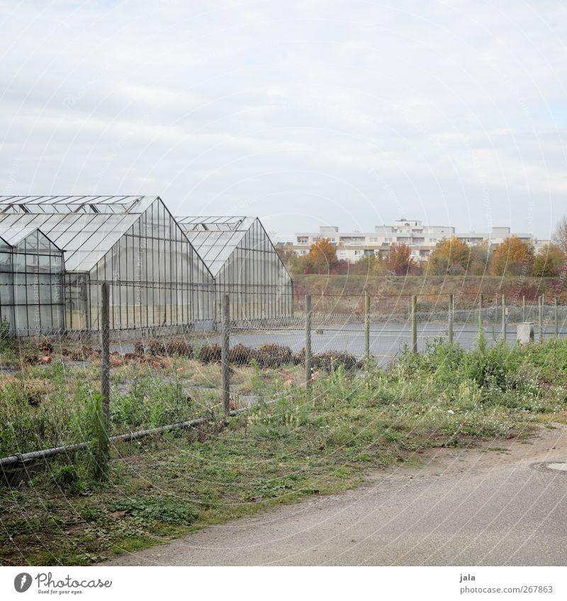 stadtrand Himmel Stadt Baum Pflanze Haus Gras Gebäude trist Bauwerk Gewächshaus