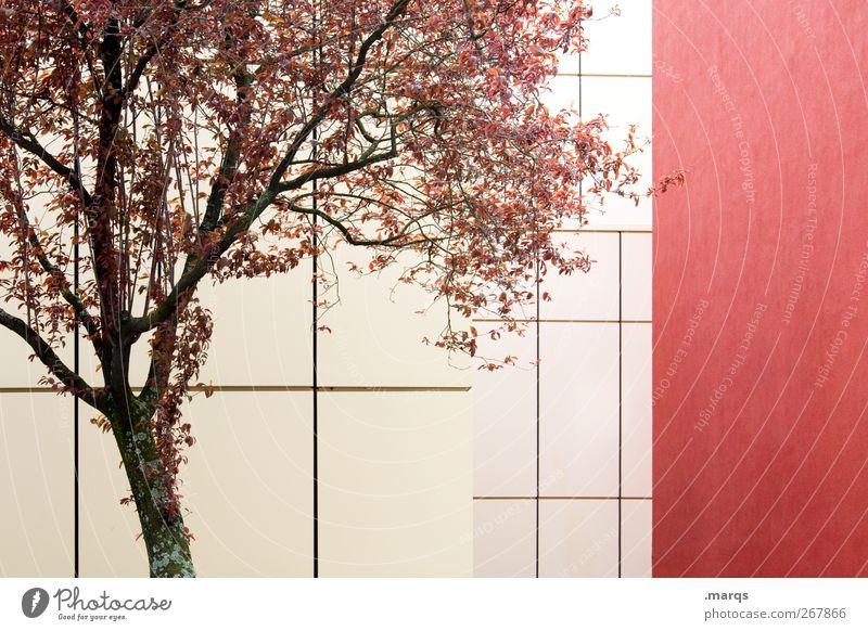 Cherry Natur schön Baum Pflanze rot Farbe Umwelt Gefühle Architektur Linie Hintergrundbild Fassade Klima ästhetisch Ast Blühend