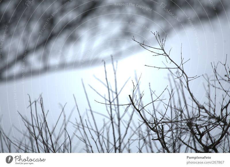 Galhoos Winter Umwelt Natur Pflanze Herbst Sträucher Farbfoto Außenaufnahme Detailaufnahme abstrakt Menschenleer Tag Silhouette Zweig Geäst Gegenlicht