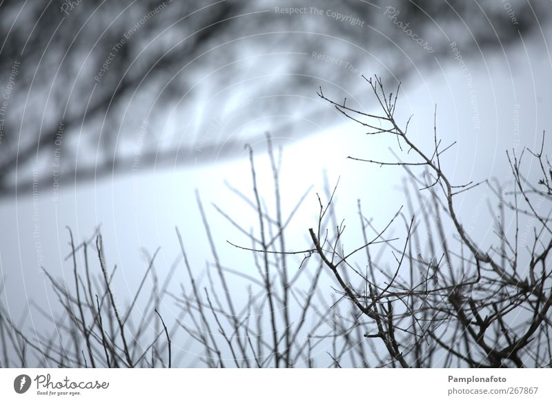 Natur Pflanze Winter Umwelt Herbst Sträucher Zweig Geäst laublos Vor hellem Hintergrund