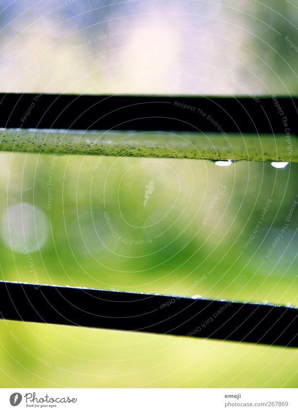 Aprilwetter Natur grün Sommer Umwelt Frühling Garten Regen Wetter Klima natürlich Wassertropfen Schönes Wetter Klimawandel Jalousie