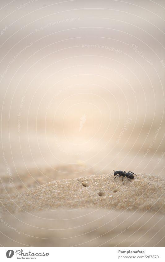 Natur Meer Strand Tier Einsamkeit Freiheit Sand Erde Kraft Erfolg Macht niedlich einzigartig Willensstärke selbstbewußt Überleben