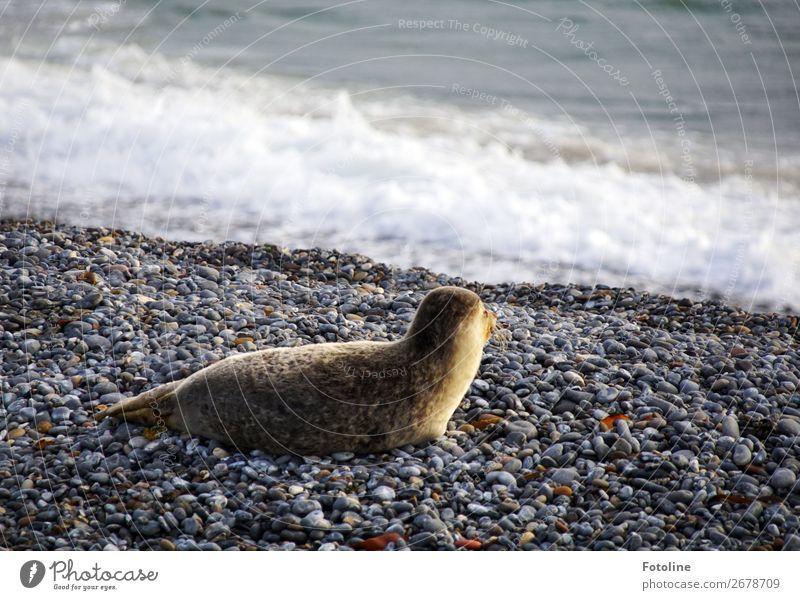 Ich seh ihn... Umwelt Natur Tier Urelemente Erde Wasser Winter Wetter Schönes Wetter Wellen Küste Strand Nordsee Meer Insel Wildtier Fell 1 frei nah nass