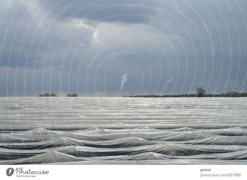 Wellen-Fake Natur blau Umwelt Landschaft Frühling grau Wetter Feld Kunststoff Landwirtschaft schlechtes Wetter Spargel Folie Wellenform Spargelzeit Spargelfeld