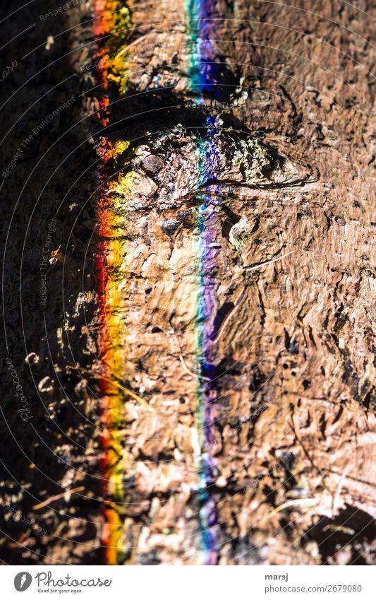 Aber es war lustig | !Trash! 2018 harmonisch Baumrinde Baumstamm Lichtbrechung außergewöhnlich gruselig trashig seltsam sinnlos regenbogenfarben gestreift
