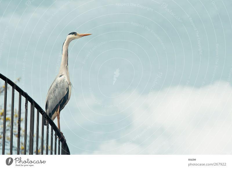 Wie Sie sehen ... Umwelt Tier Urelemente Luft Himmel Wolken Sommer Schönes Wetter Wildtier Vogel 1 stehen warten dünn elegant natürlich Neugier Reiher Geländer