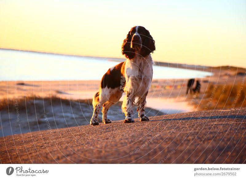 Wo ist Herrchen Ferien & Urlaub & Reisen Natur Hund Pflanze blau Wasser Landschaft Tier Freude Ferne Strand Herbst Gras Spielen Freiheit braun